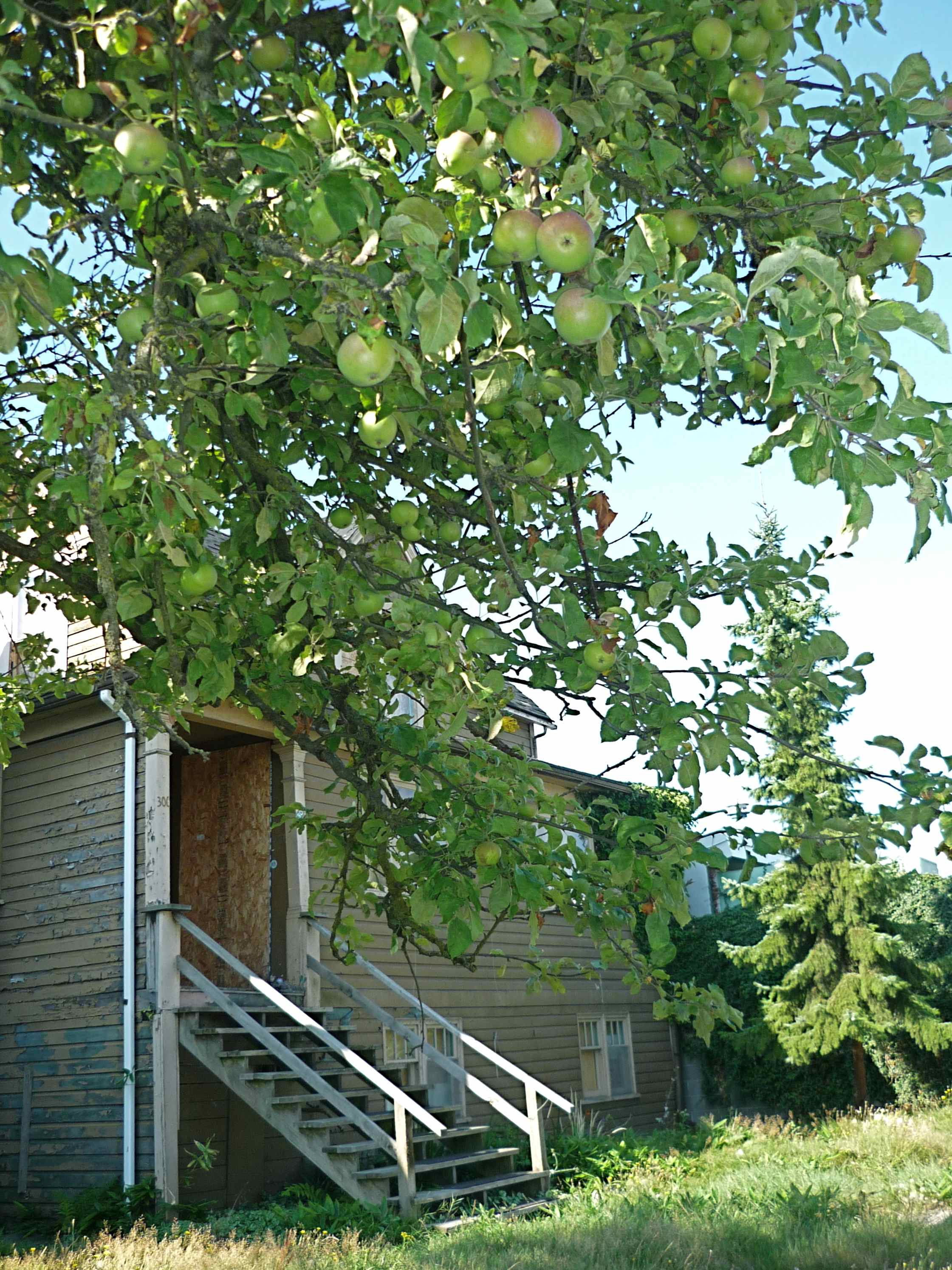 does anyone rescue heritage trees  the final harvest of a 1950s Tract Homes 1950s homes youtube